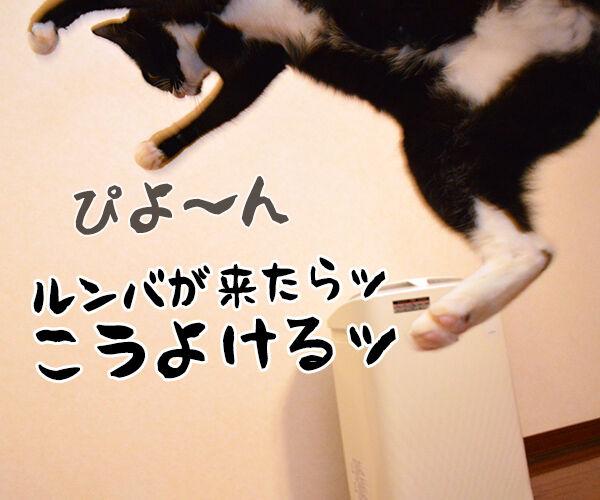 アタチ 特訓したのッ 猫の写真で4コマ漫画 2コマ目ッ