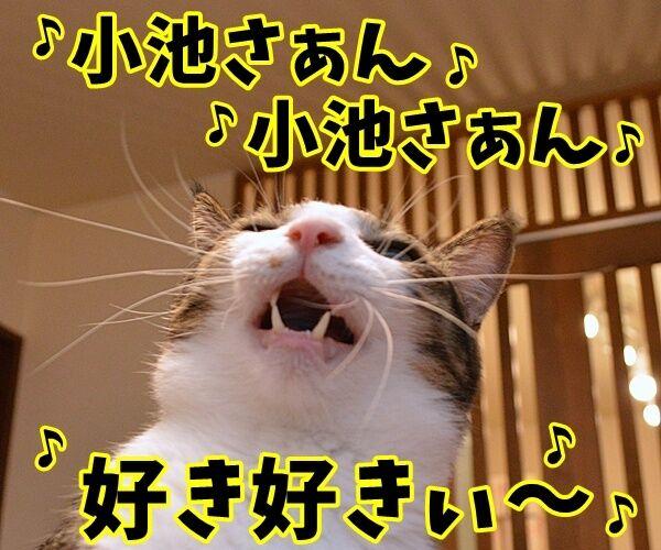 石田純一氏、東京都知事選に出馬断念 猫の写真で4コマ漫画 3コマ目ッ