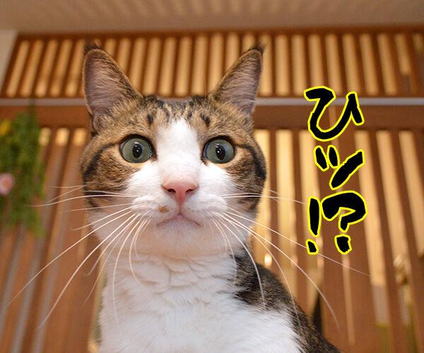 「秋分の日」でクイズですッ!! 猫の写真で4コマ漫画 3コマ目ッ