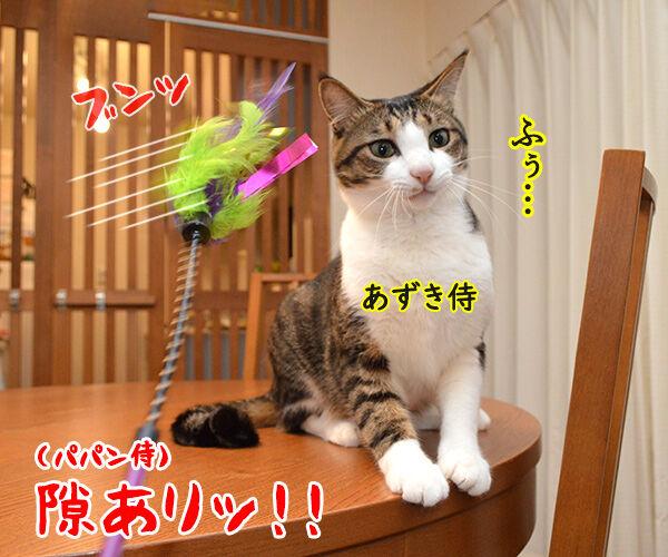 猫侍 其の四 猫の写真で4コマ漫画 1コマ目ッ