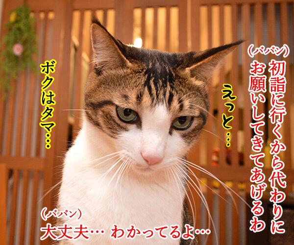 初詣のお願いはなにかしら? 猫の写真で4コマ漫画 1コマ目ッ