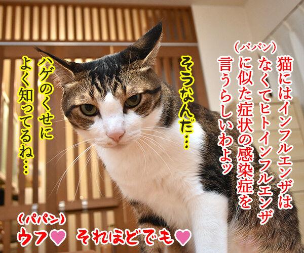 インフルエンザが流行ってるみたいなのッ 猫の写真で4コマ漫画 2コマ目ッ