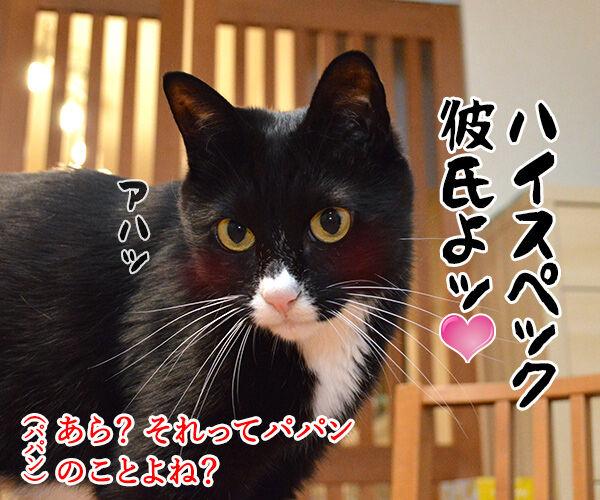 初詣のお願いはなにかしら? 猫の写真で4コマ漫画 3コマ目ッ