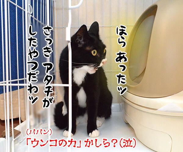 わたしの力をとくと見るがよいッ 猫の写真で4コマ漫画 4コマ目ッ