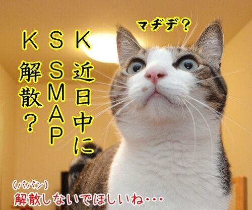 KSK 猫の写真で4コマ漫画 3コマ目ッ