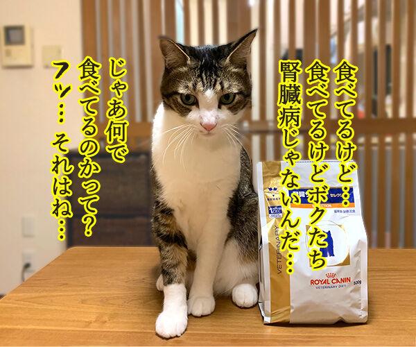 猫さんに多い病気は慢性腎臓病(腎不全)なのよッ 猫の写真で4コマ漫画 3コマ目ッ
