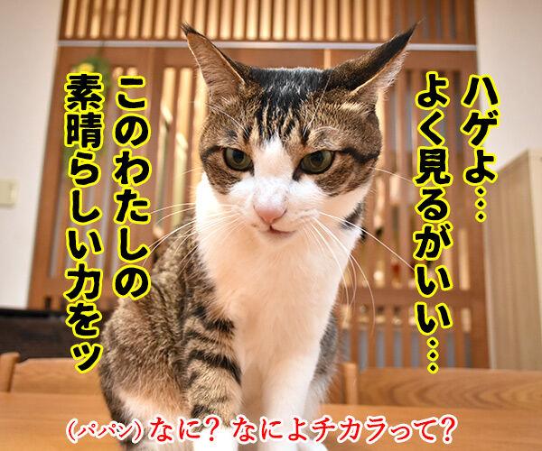 わたしの力をとくと見るがよいッ 猫の写真で4コマ漫画 1コマ目ッ