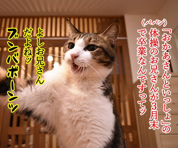 「おかあさんといっしょ」のよしお兄さんが3月末で卒業なんですってッ 猫の写真で4コマ漫画 1コマ目ッ