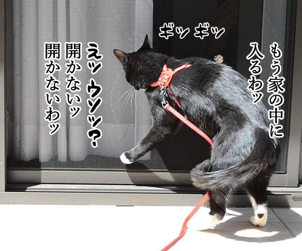 女子に紫外線は大敵なのよッ 猫の写真で4コマ漫画 2コマ目ッ