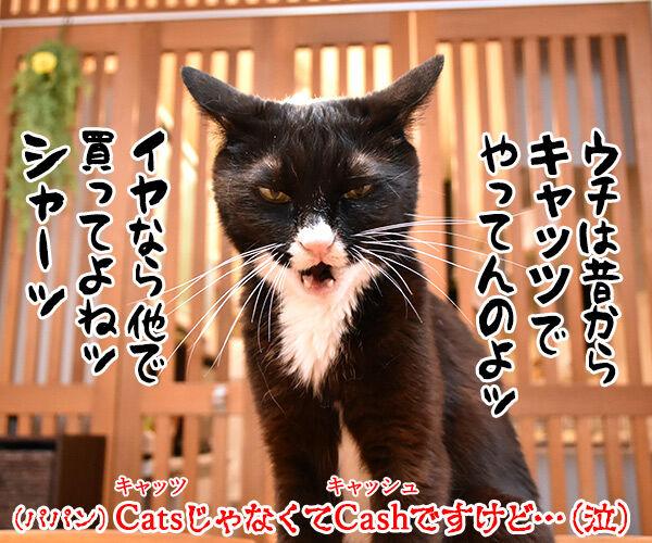 あずだいマートでお買い物 其の五 猫の写真で4コマ漫画 4コマ目ッ
