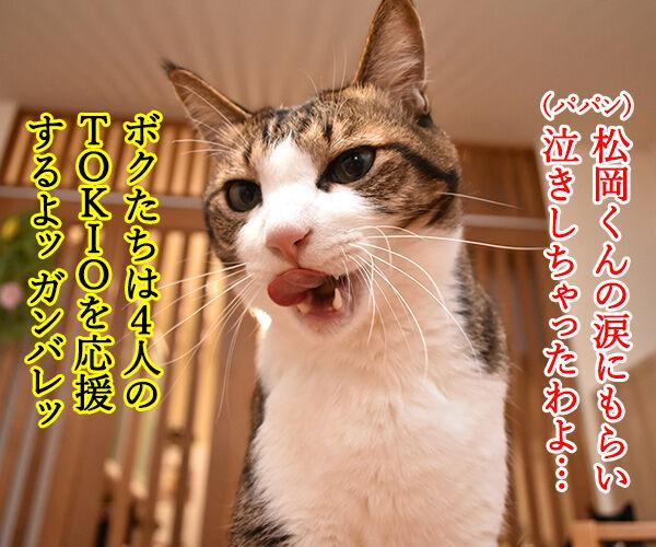 ボクたちは4人のTOKIOを応援しますッ 猫の写真で4コマ漫画 2コマ目ッ