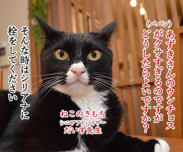 教えてッ だいず先生ッ 其の二 猫の写真で4コマ漫画 2コマ目ッ