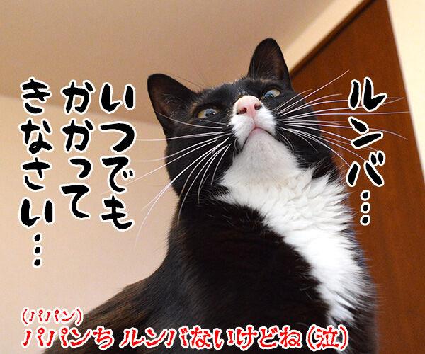 アタチ 特訓したのッ 猫の写真で4コマ漫画 4コマ目ッ