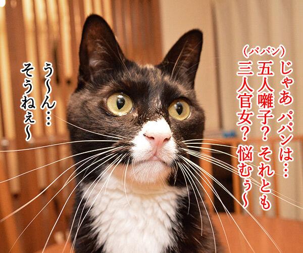 きょうはたのしいひな祭り 猫の写真で4コマ漫画 3コマ目ッ