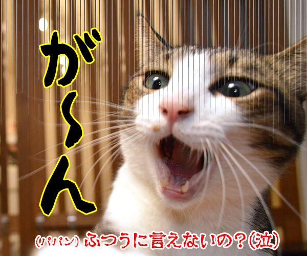 「秋分の日」でクイズですッ!! 猫の写真で4コマ漫画 4コマ目ッ