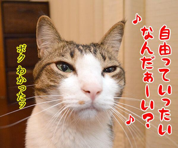 自由っていったいなんだぁーい? 猫の写真で4コマ漫画 3コマ目ッ
