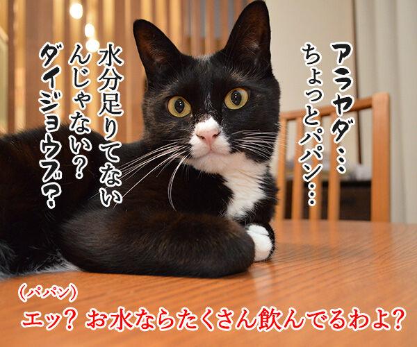 熱中症に気をつけてッ 猫の写真で4コマ漫画 3コマ目ッ