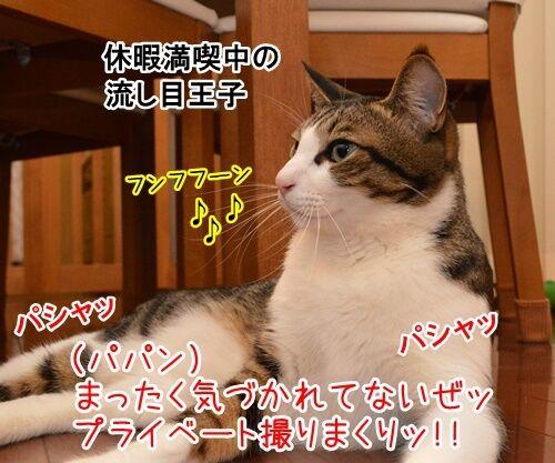 パパラッチ 猫の写真で4コマ漫画 2コマ目ッ