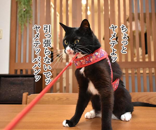 パパンはお散歩に行きたいのよッ 猫の写真で4コマ漫画 1コマ目ッ