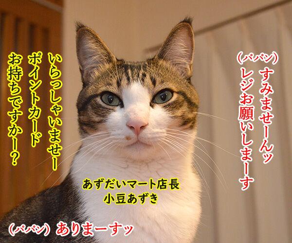 あずだいマートでお買い物 其の三 猫の写真で4コマ漫画 1コマ目ッ