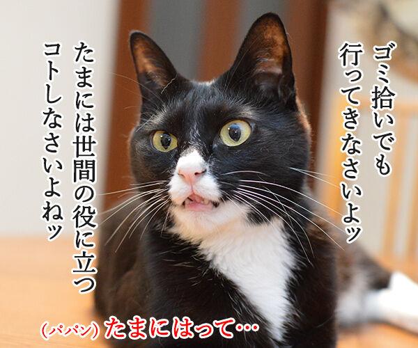 きょうは、ごみゼロの日 猫の写真で4コマ漫画 2コマ目ッ