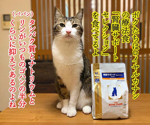 猫さんに多い病気は慢性腎臓病(腎不全)なのよッ 猫の写真で4コマ漫画 2コマ目ッ