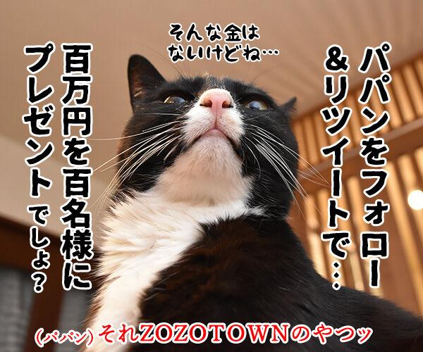 皆様に感謝の気持ちを込めて… キャンペーン第2弾なのよッ 猫の写真で4コマ漫画 2コマ目ッ