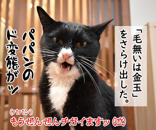 抜き打ちで漢字のテストをするのよッ 猫の写真で4コマ漫画 4コマ目ッ
