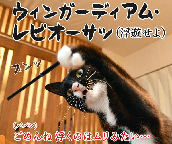 「ハリー・ポッター」を観た後は… 猫の写真で4コマ漫画 3コマ目ッ