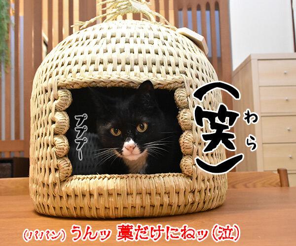 信州安曇野産の藁100%の『ねこつぐら』なのッ 猫の写真で4コマ漫画 4コマ目ッ