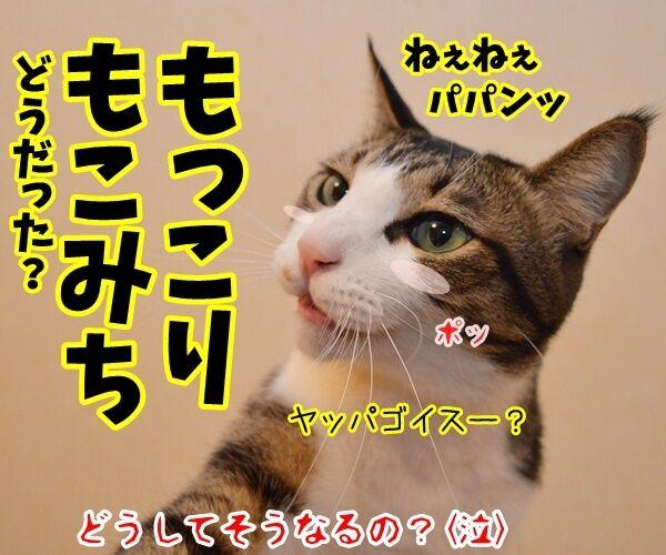 保険に入ろうと思って…… 猫の写真で4コマ漫画 4コマ目ッ