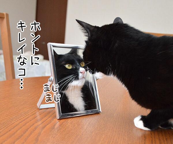 鏡の中の 猫の写真で4コマ漫画 2コマ目ッ