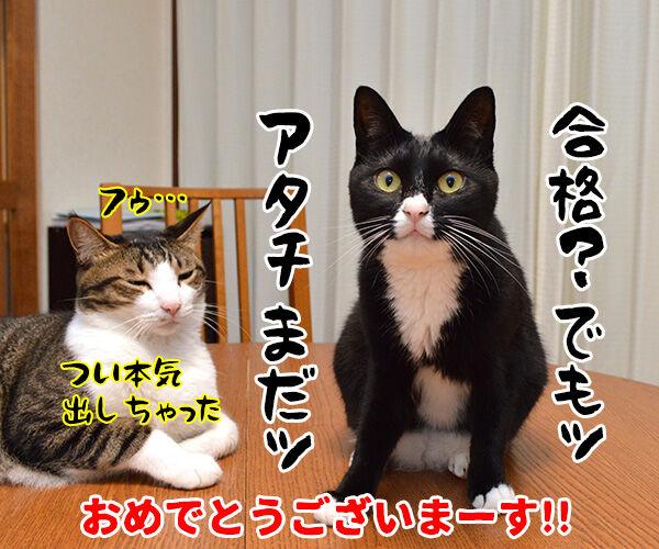 のど自慢大会 其の四 猫の写真で4コマ漫画 4コマ目ッ