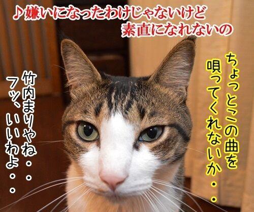 家に帰ろう 猫の写真で4コマ漫画 2コマ目ッ