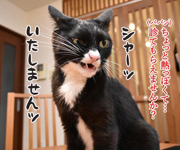 大ズ門未知子は一匹にゃんこのドクターなのッ 猫の写真で4コマ漫画 2コマ目ッ