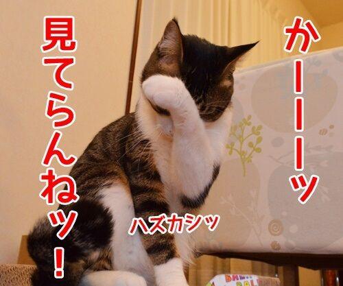 今すぐKiss me 猫の写真で4コマ漫画 4コマ目ッ