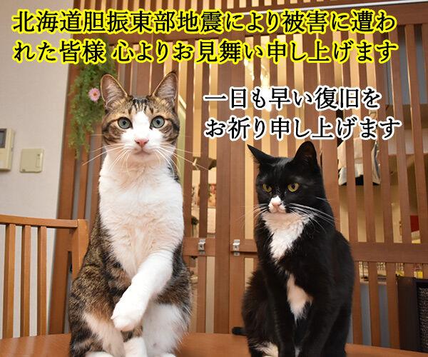 北海道胆振東部地震 心よりお見舞い申し上げます 猫の写真で4コマ漫画 1コマ目ッ