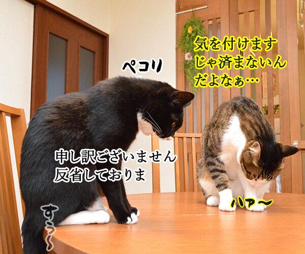 OLだいずの大失敗 猫の写真で4コマ漫画 2コマ目ッ