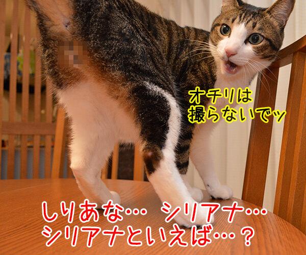 しりあな 猫の写真で4コマ漫画 2コマ目ッ