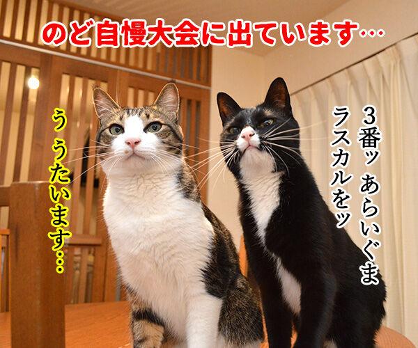 のど自慢大会 其の四 猫の写真で4コマ漫画 1コマ目ッ