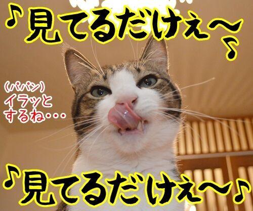 なに見てるの? 猫の写真で4コマ漫画 2コマ目ッ