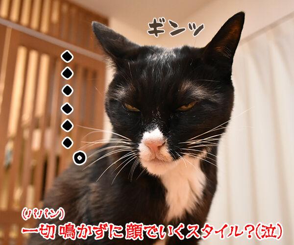 猫さんがアピールするときの鳴き方は? 猫の写真で4コマ漫画 4コマ目ッ