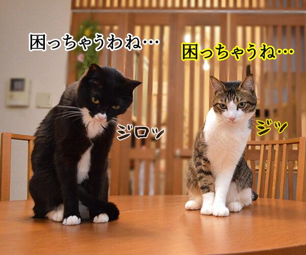 遺言を書く人が増えてるんですってッ 猫の写真で4コマ漫画 3コマ目ッ