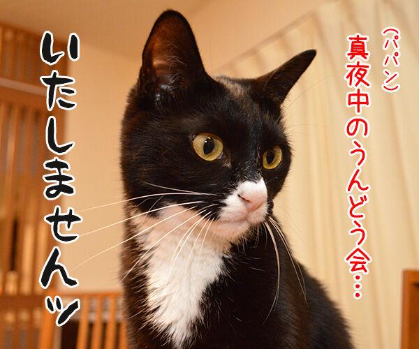 ドクターX 其の二 猫の写真で4コマ漫画 2コマ目ッ