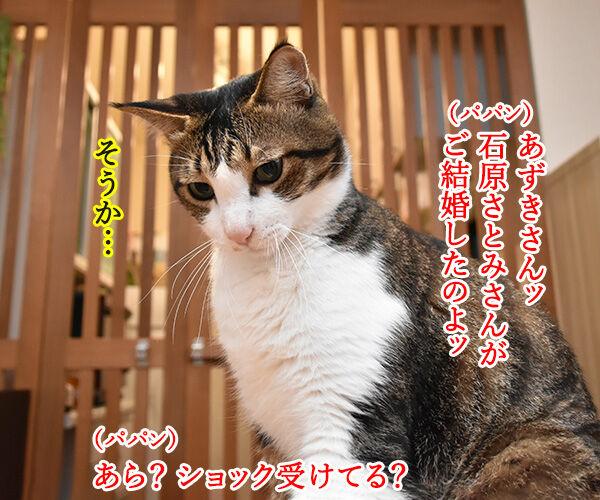 石原さとみさん ご結婚オメデトゴザマース♥ 猫の写真で4コマ漫画 2コマ目ッ