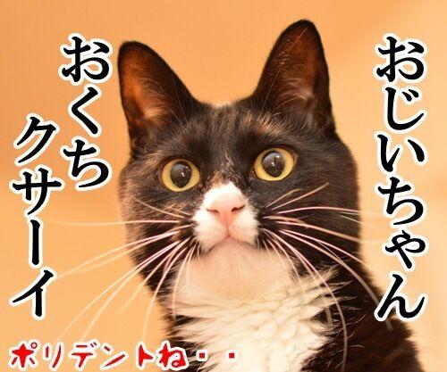 ナツカCM 其の一 猫の写真で4コマ漫画 4コマ目ッ