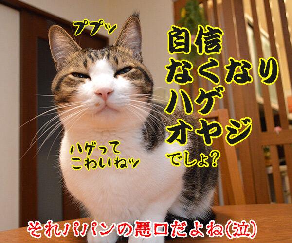 地震 雷 火事 親父 猫の写真で4コマ漫画 4コマ目ッ