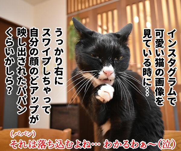 だいずさんが落ち込んでるのッ 猫の写真で4コマ漫画 4コマ目ッ