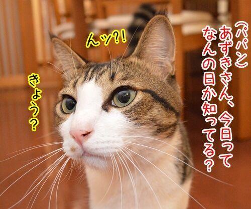 きょうは何の日? 猫の写真で4コマ漫画 1コマ目ッ