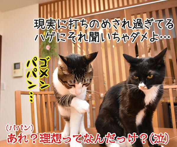 パパンの理想の猫って? 猫の写真で4コマ漫画 4コマ目ッ